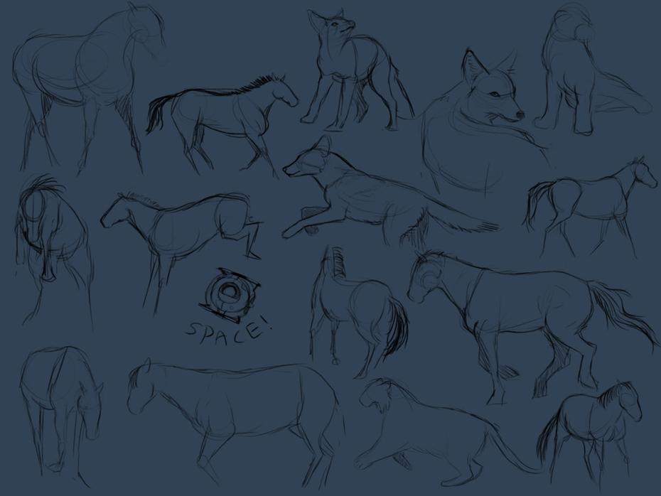 djur skisser