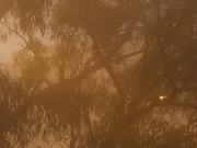 Gold Gold Mist