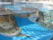 sea turtles !!!