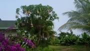 Lola's Garden