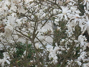 Spring LIfe