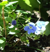 wild blu