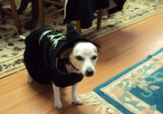 She did not approve of her Halloween costume