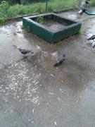 Birds of Double Rock