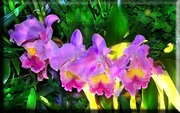 glowing sprig of violet orchids