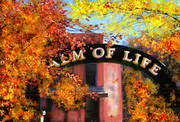 balm of life springs sign in park in eureka finishedjpg