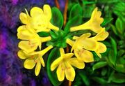 cluster of yellow bells with lava rock-1