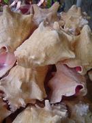 All The Perfect Seashells