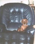 Swade in the Chair