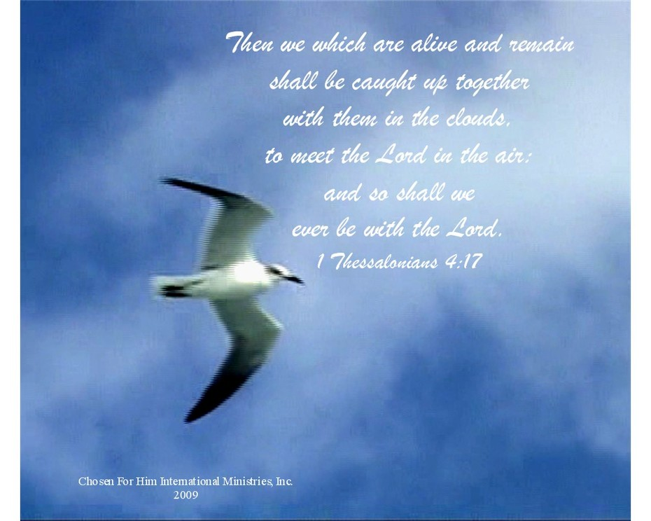 1 Bird Modified w verse