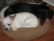 Pix & Carli Snuggling 2