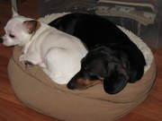 Pix & Carli in Snuggling