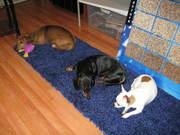 Sleepy Puppies