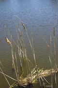 swamp weeds cape canav 9_20_10