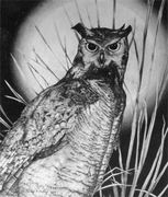 Becky P. Kelley- Great Horned Owl in graphite