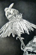 Becky P. Kelley Bee on Flower 1 in charcoal