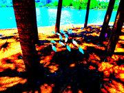 Birds Lake Eola