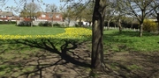 Hampton Common in Bloom by Heather
