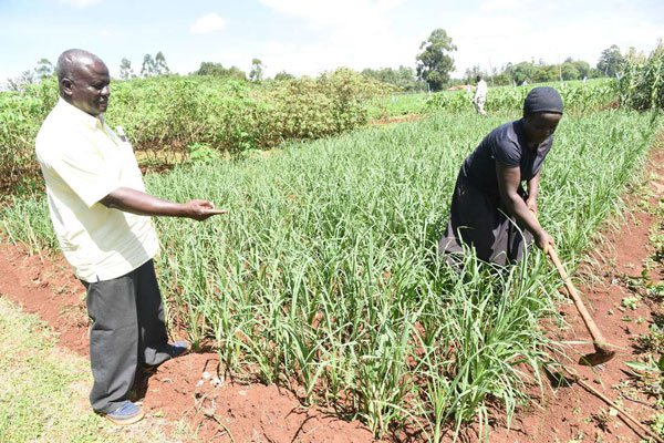 EU to fund Kenyan smallholder agribusinesses in latest boost for agriculture