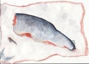 I was a salmon