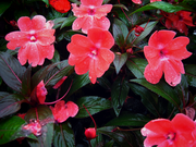 Flower in rain..
