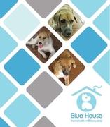 Campaign : Blue House