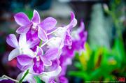 ดอกไม้ หน้าบ้าน