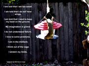 squirrel_poem copy