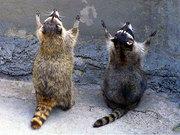 Animals of Faith