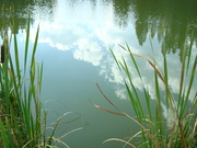 clouds and cattails