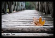 Φθινοπωρινό γεφύρι....