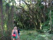 Honolua Bay forest