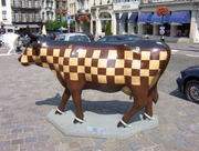 vaches 013