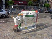 vaches 014