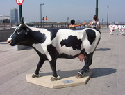 vaches 040