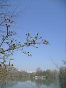 Ebauche de printemps - 05