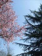 Ebauche de printemps - 16