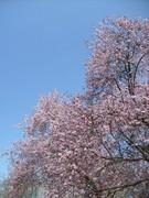 Ebauche de printemps - 18