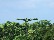 Arbre oiseau(Nature5989)