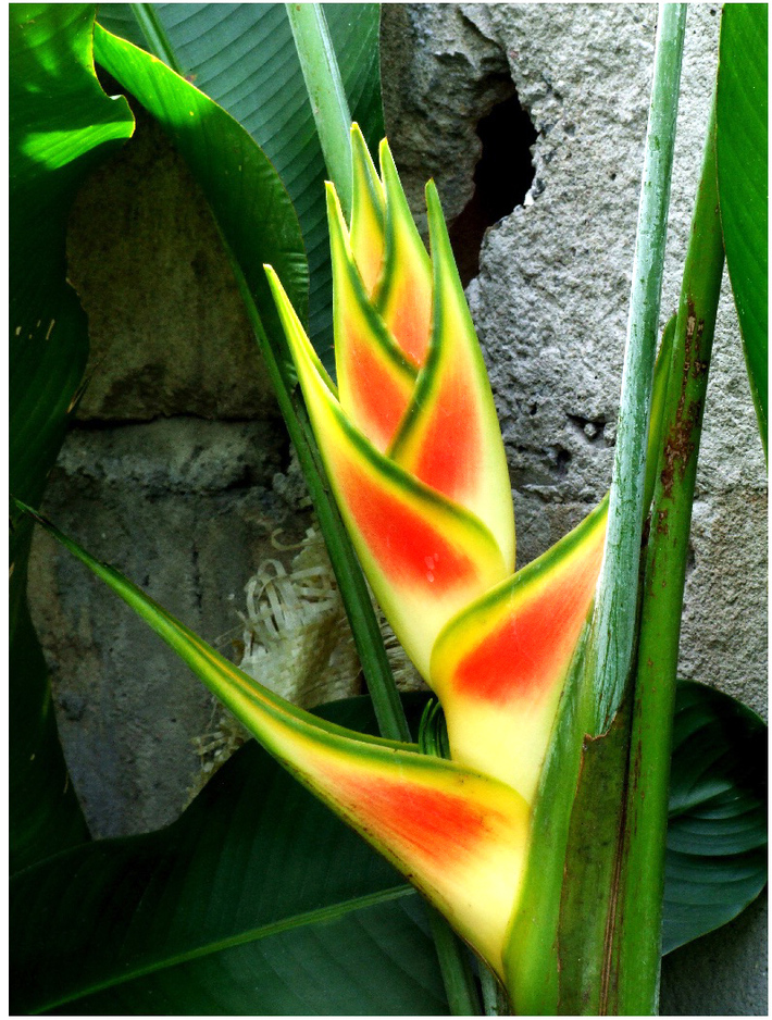 African flower(Nature6553)