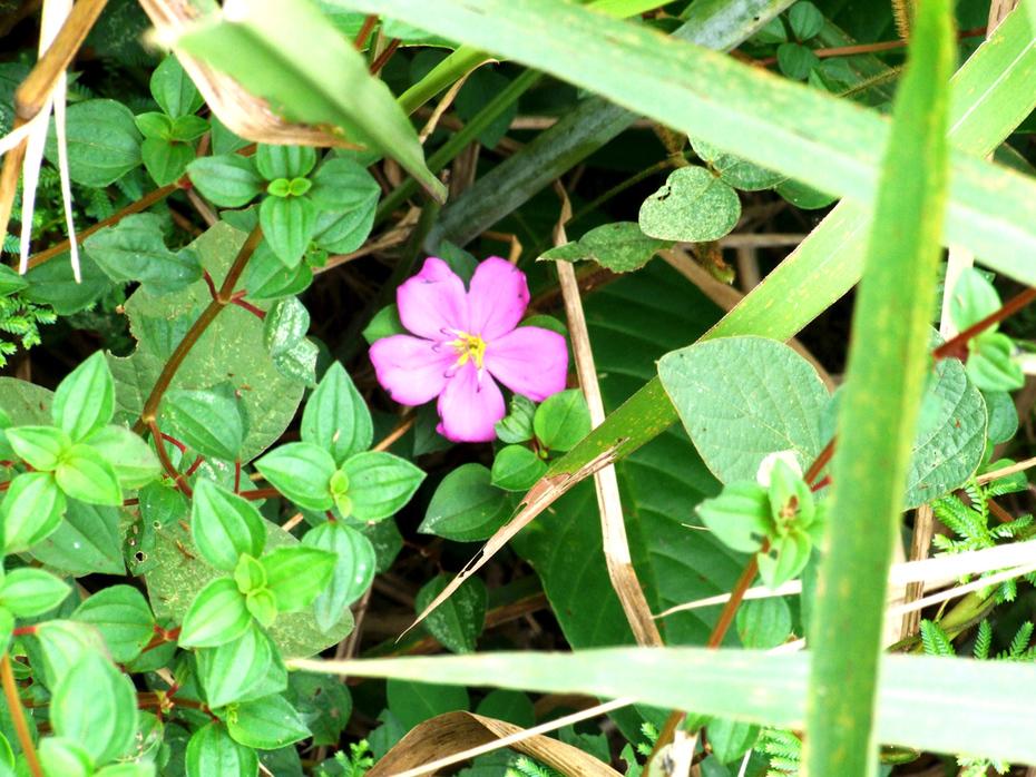 FleursSauvages(Nature6655)
