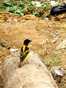 Oiseau terre (Nature6657)