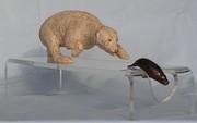 chasse au phoque