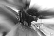 Balade de chat