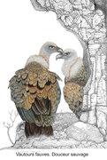 vautours-fauves--douceur-sauvage
