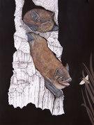 petites chauve-souris , pipistrelles-soprane