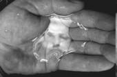 au creux de la main
