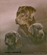 Famille de labradors
