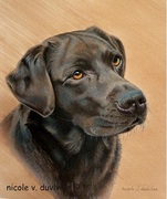 "Portrait de Labrador ""chocolat"" - par Nicole V. Duvivier"