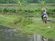 Entre deux rizières